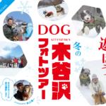 冬の木谷沢フォトツアー~愛犬と楽しむ冬の木谷沢散策~